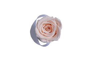 Classic mini white box - light peach rose