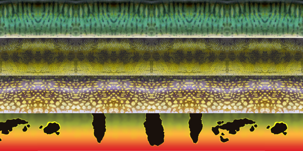 predator fly gear collaboration