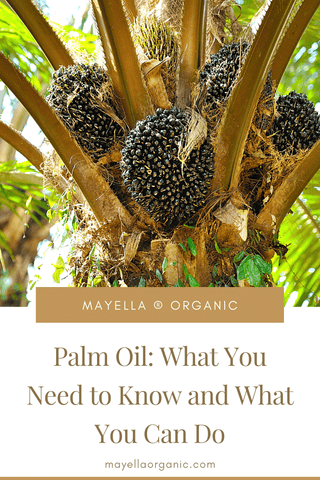 pinterest image of oil palm fruit bunches in an oil palm tree