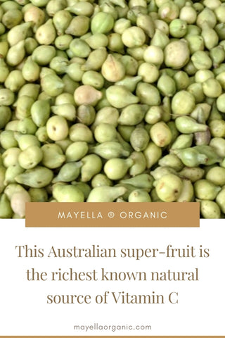 pinterest image of a harvest of kakadu plum