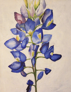 Blue Bonnet Limited Edition Print