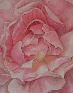 Pink Rose Limited Edition Print