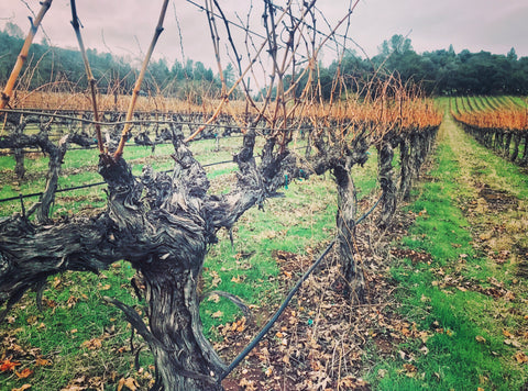 19 Winter Murphys Vineyard
