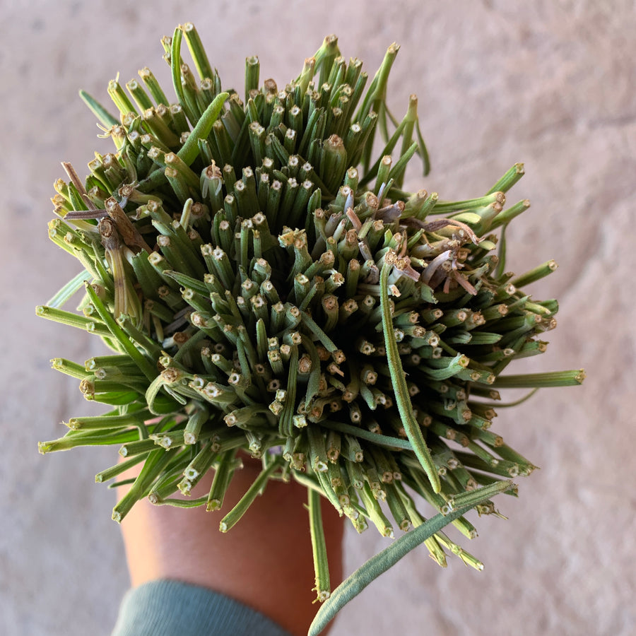 Estimate how many stems are in each dried Locke Lavender bouquet