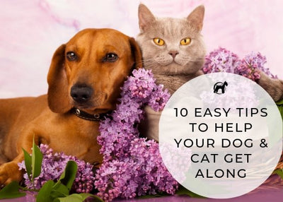 10 Easy Tips To Help Your Cat and Dog Get Along