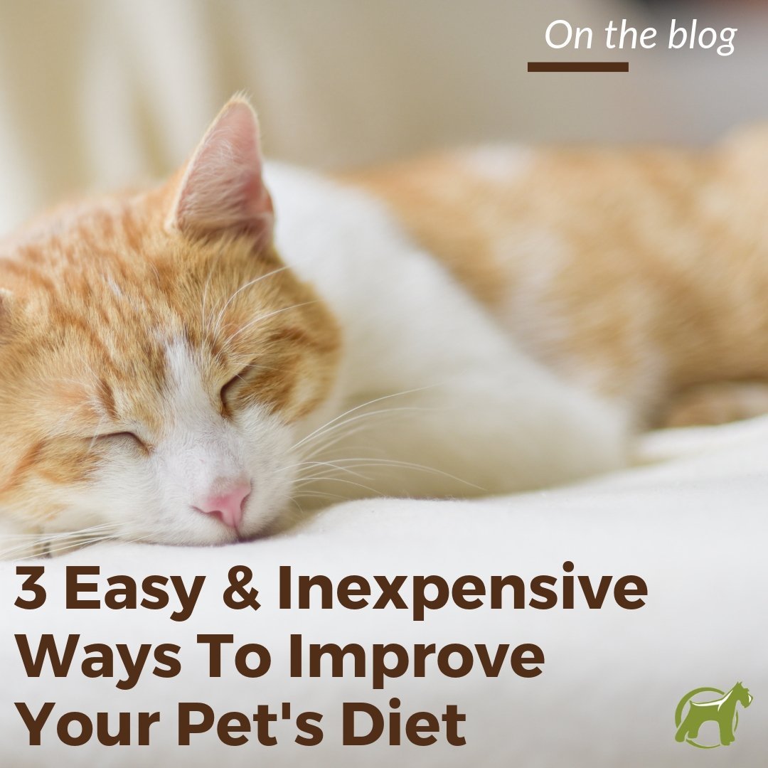 3 Easy and Inexpensive Ways to Improve Your Pet's Diet