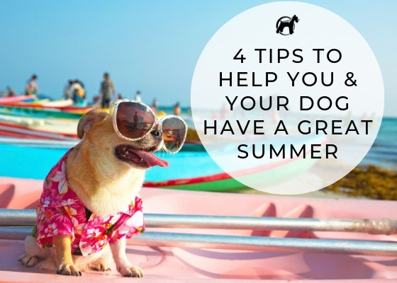 4 Tips To Help You & Your Dog Have A Great Summer