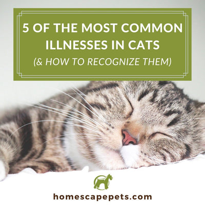 5 of the Most Common Illnesses in Cats   (& How to Recognize Them)