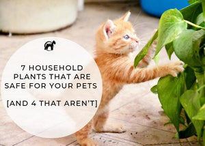7 Household Plants That Are Safe for Your Pets [and 4 That Aren't]