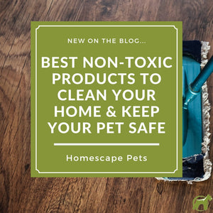 Best Non-Toxic Products To Clean Your Home & Keep Your Pet Safe