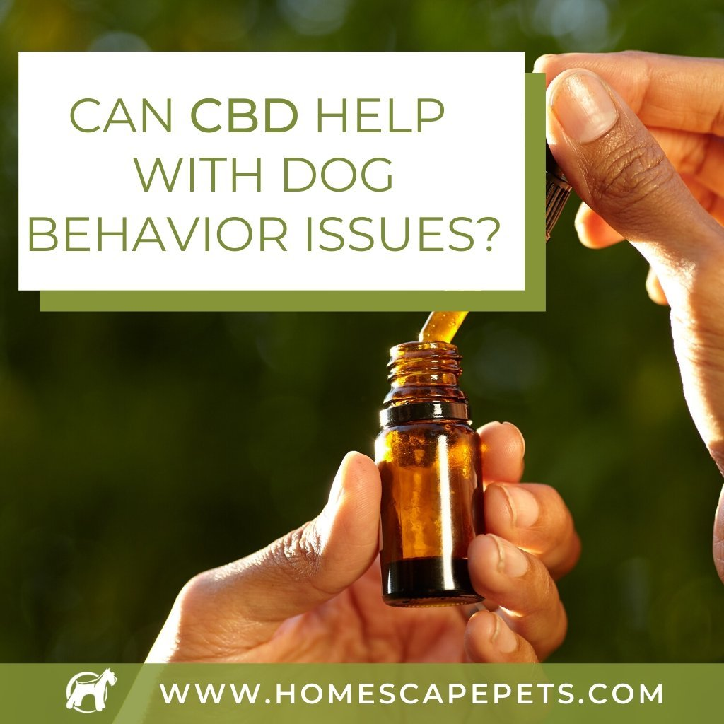 Can CBD Help With Dog Behavior Issues?