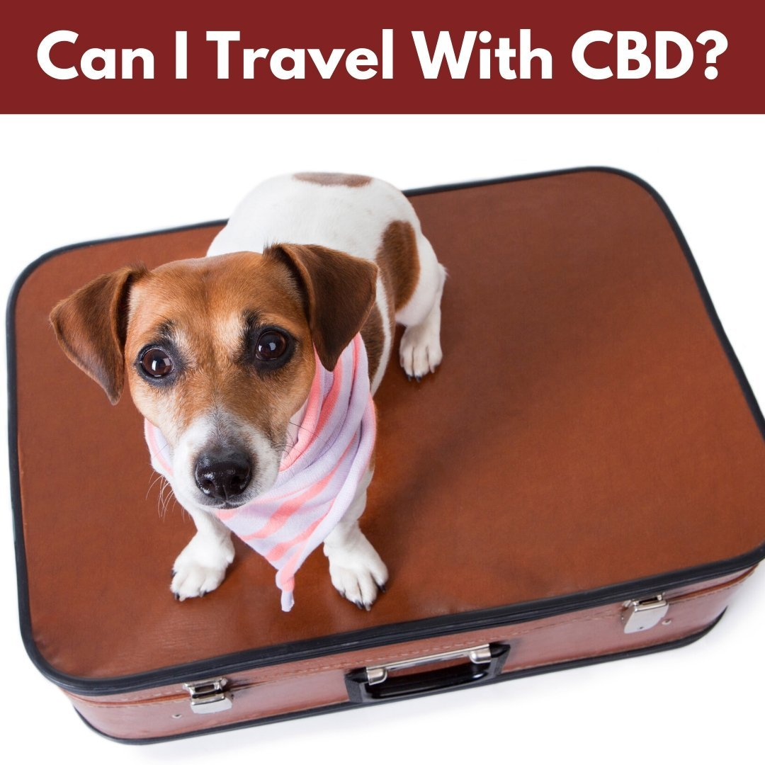 Can I Travel With CBD?