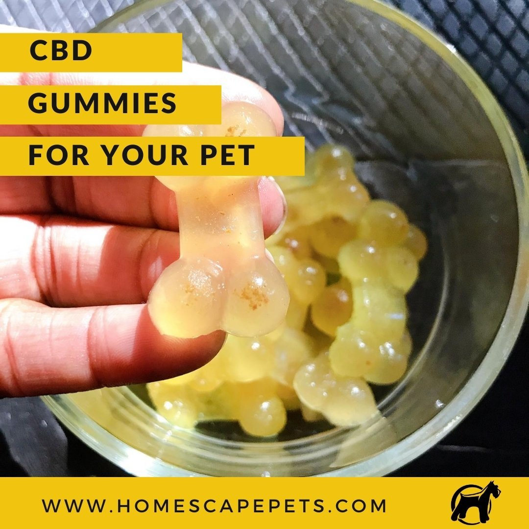 CBD Gummies For Your Pet