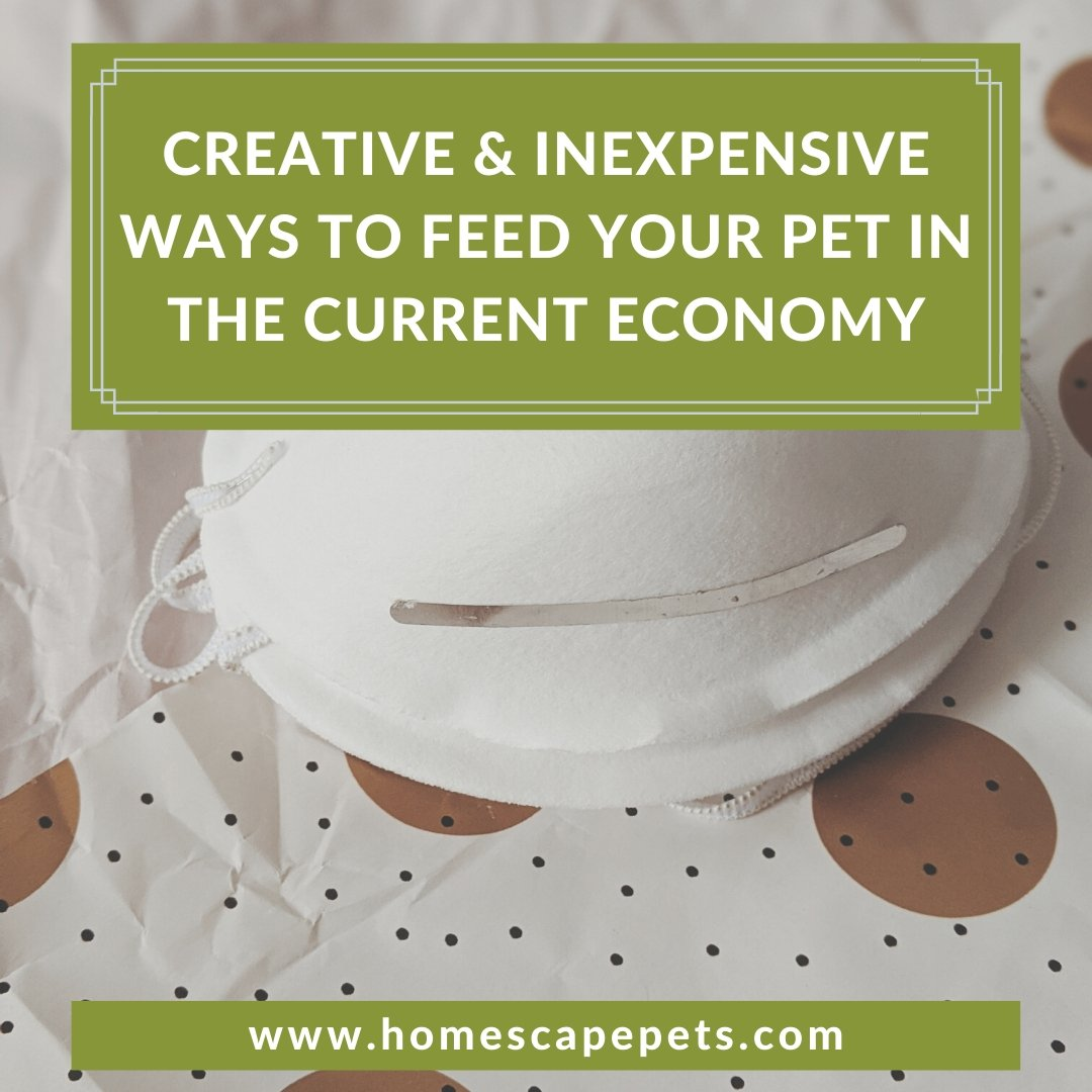 Creative & Inexpensive Ways to Feed Your Pet in the Current Economy