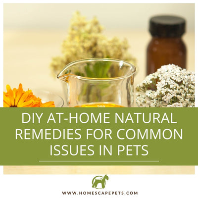 DIY At-Home Natural Remedies for Common Issues in Pets