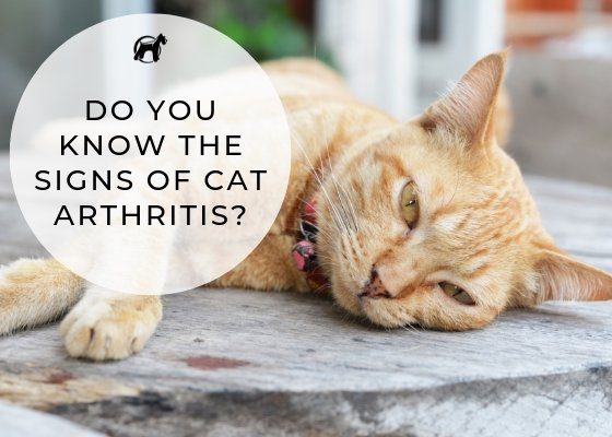 Do You Know The Signs Of Cat Arthritis?