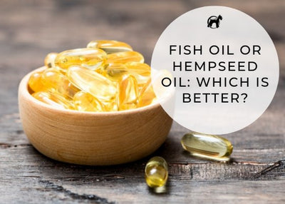 Fish Oil or Hempseed Oil: Which Is Best For Your Pet?