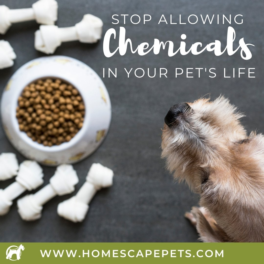 Get Rid Of The Chemicals In Your Pet's Food, Treats, and Supplements