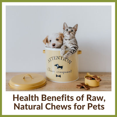 Health Benefits of Raw, Natural Chews for Cats & Dogs
