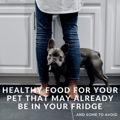 Healthy Foods For Your Pet That May Already Be In Your Fridge (& Some To Avoid)