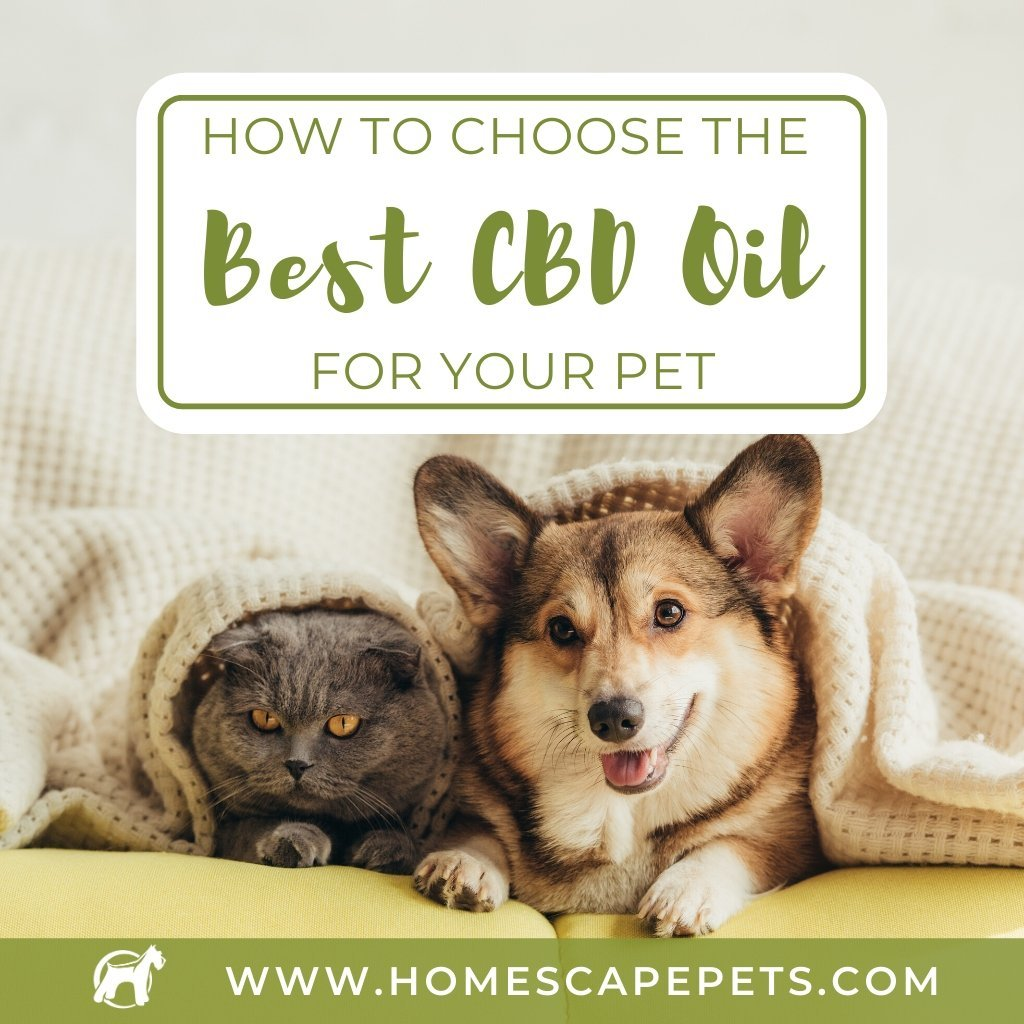 How To Choose The Best CBD Oil For Your Pet