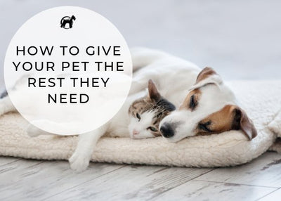 How To Give Your Pet The Rest They Need (and get the break YOU need)