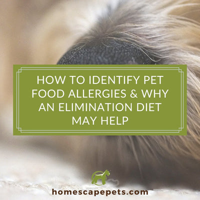 How to Identify Pet Food Allergies and Why an Elimination Diet May Help