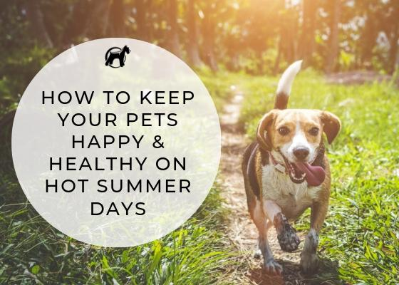 How to Keep Your Pets Happy & Healthy On Hot Summer Days