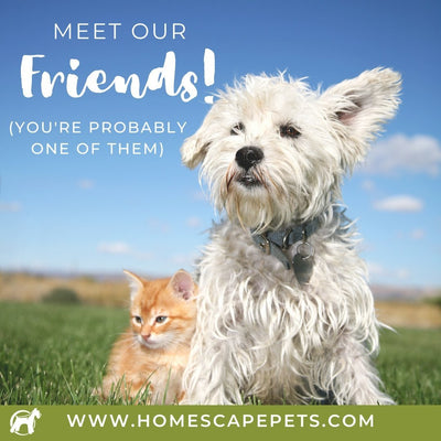 Meet A Few Of Our Friends!