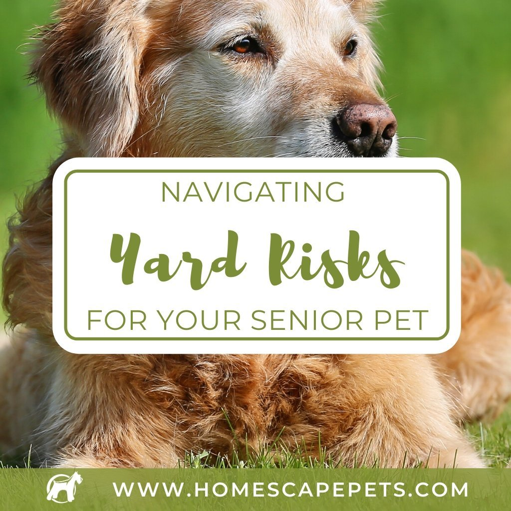 Navigating Yard Risks for Your Senior Pet