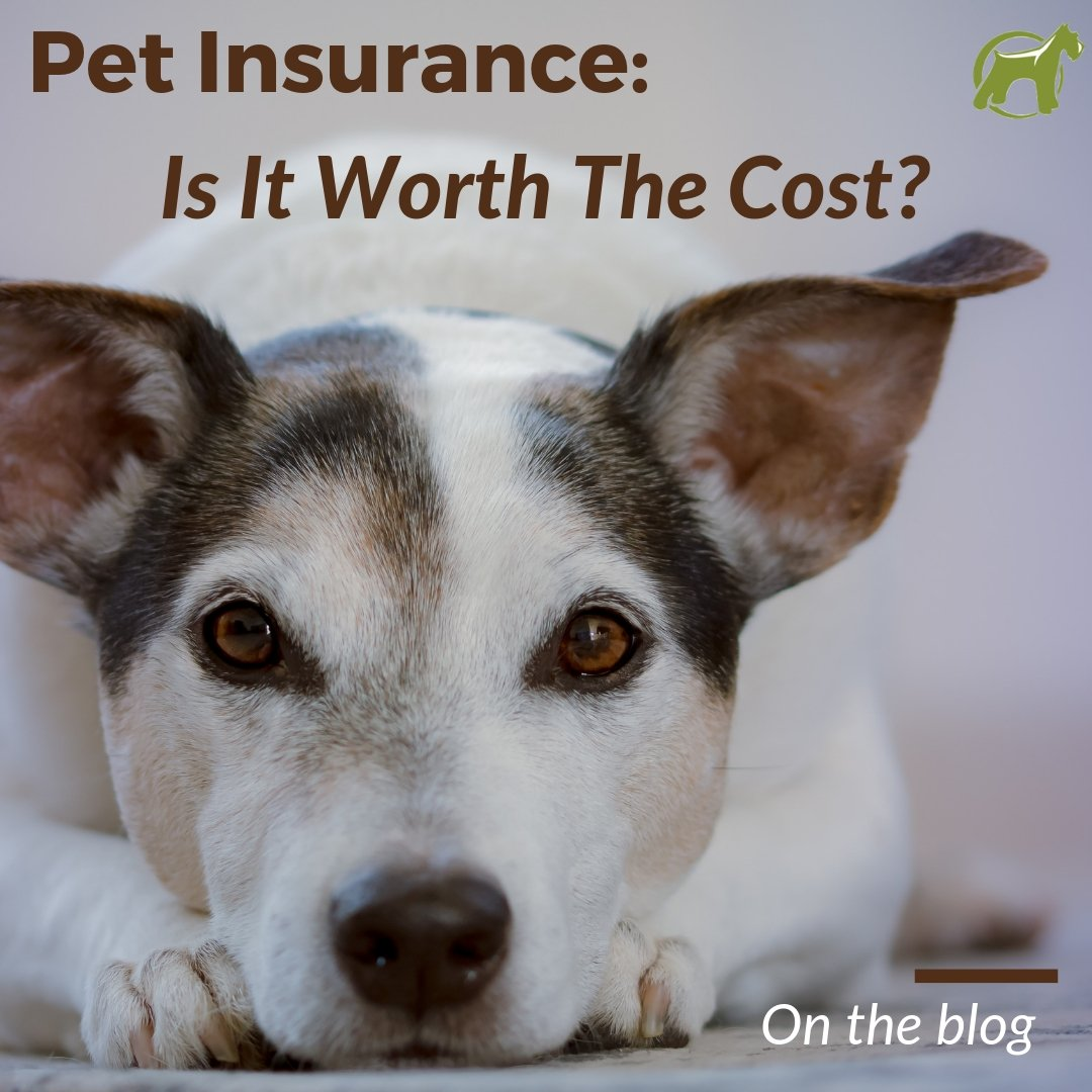 Pet Insurance - Is It Worth The Cost?