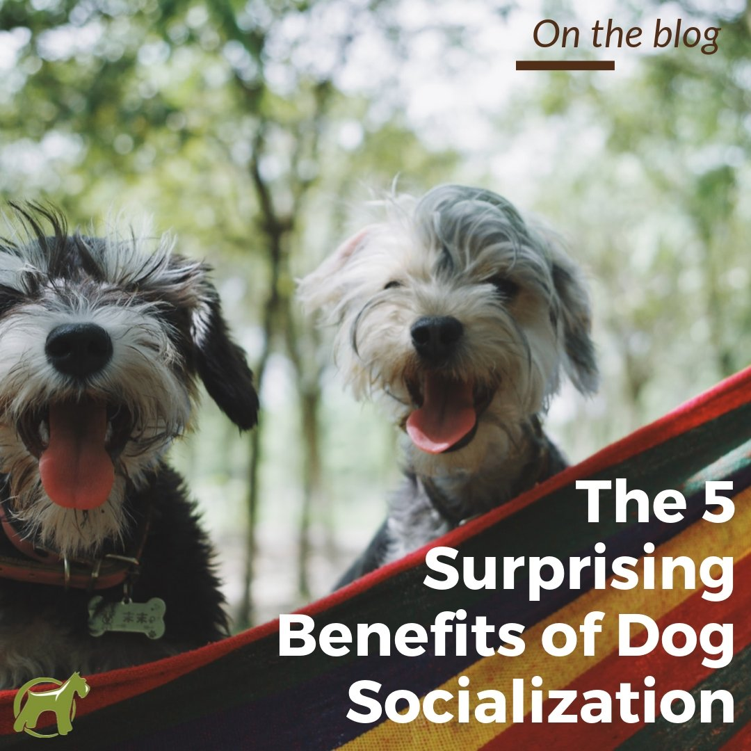 The 5 Surprising Benefits of Dog Socialization