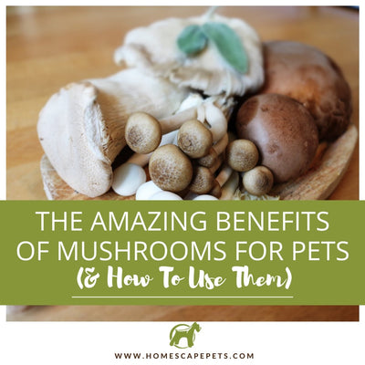 The Amazing Benefits of Mushrooms for Pets (& How To Use Them!)