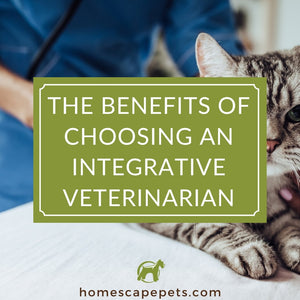 The Benefits of Choosing an Integrative Veterinarian