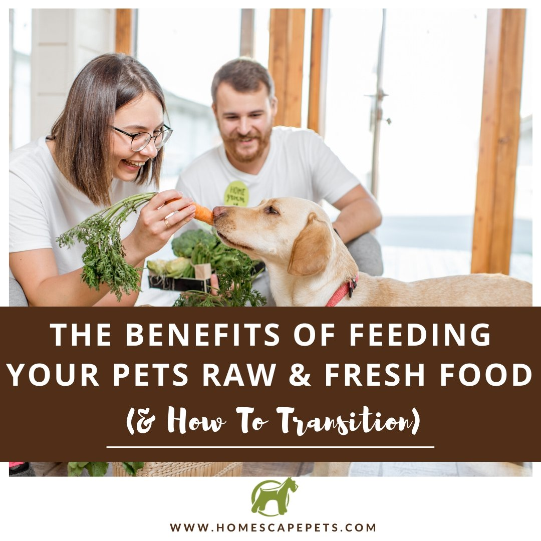 The Benefits of Feeding Your Pets Raw & Fresh Food (And How to Transition Their Diet)