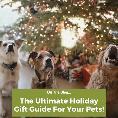 The Best Holiday Gifts for Your Pets and Friends