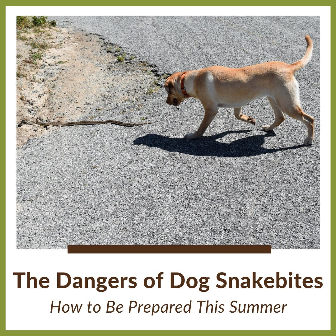 The Dangers of Snakebites in Dogs: How to Be Prepared This Summer
