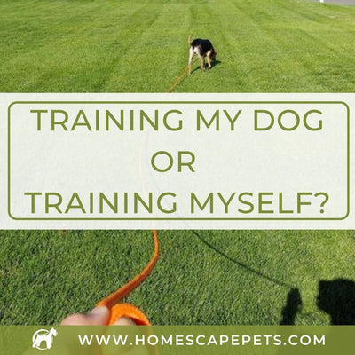 Training My Dog...Or Training Myself?