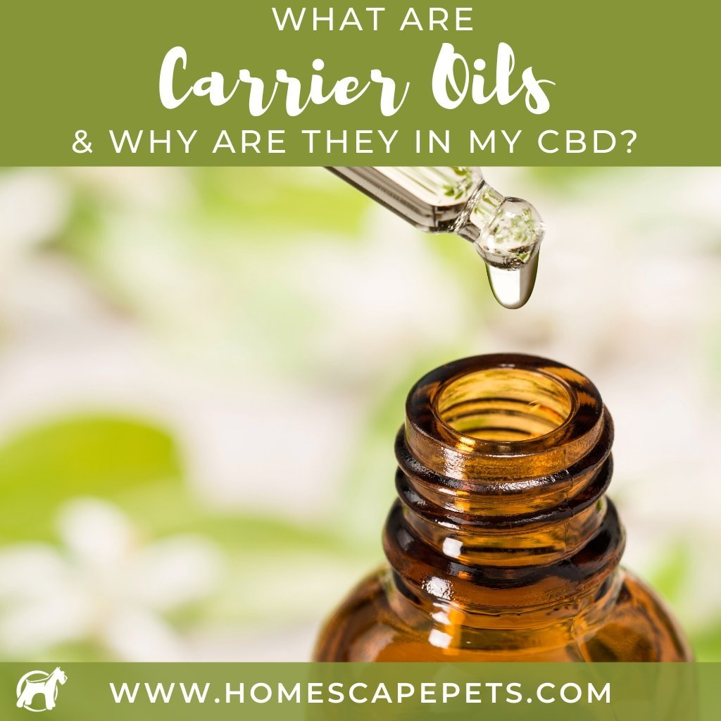 What Are Carrier Oils and Why Are They In My Pet's CBD?