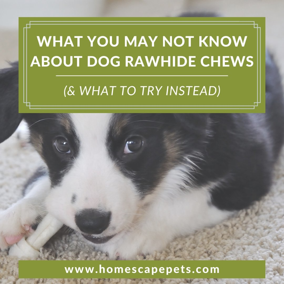 What You May Not Know About Rawhide Chews for Dogs