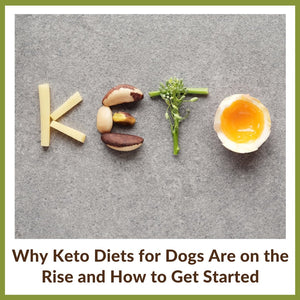 Why Keto Diets for Dogs Are on the Rise and How to Get Started