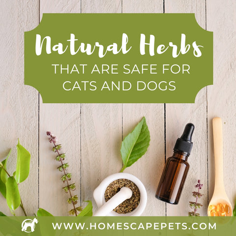 Safe Natural Herbs for Cats and Dogs