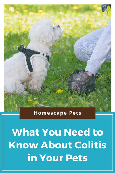 What you should know about Colitis in your pet