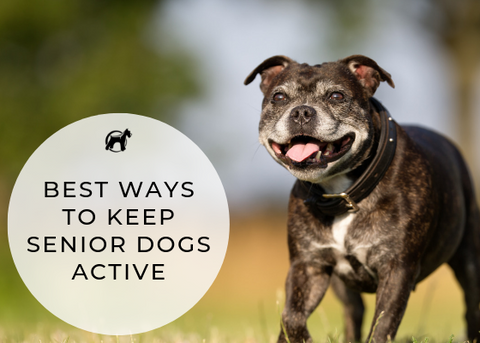 Keep Your Senior Dog Active