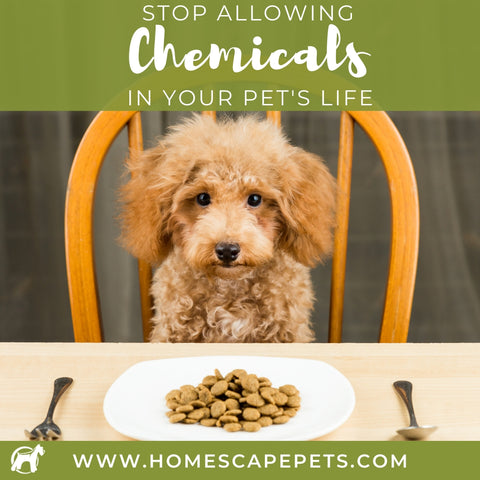 Stop Allowing Chemicals In Your Pet's Life