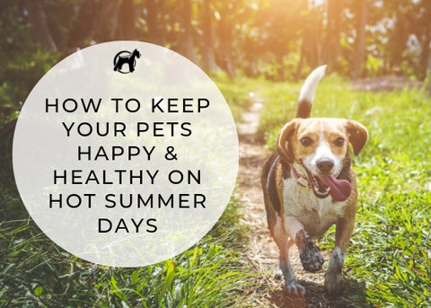 Keep Your Pets Happy and Healthy This Summer