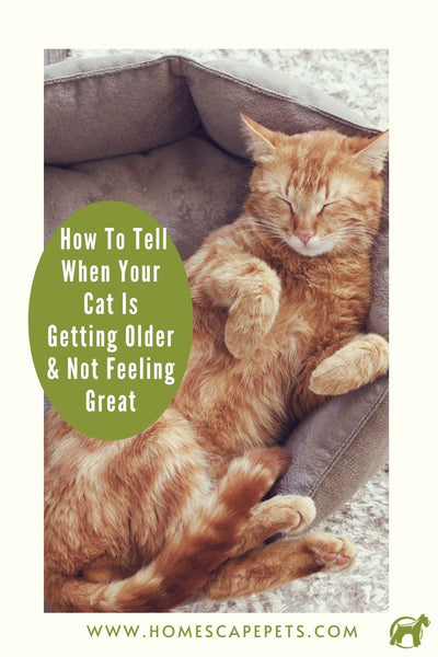 Golden tabby cat resting on soft bed. How to tell when your cat is getting older and not feeling well