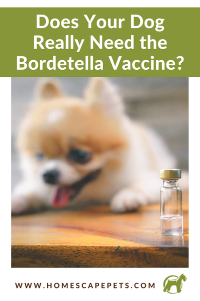 Does Your Dog Really Need The Bordetella Vaccine?