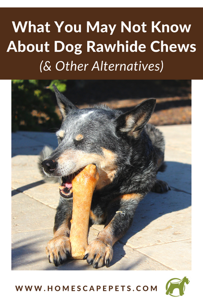 Dangers of Rawhide | Homescape Pets