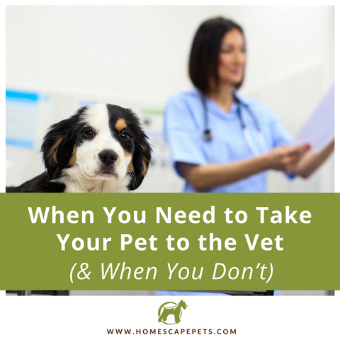 When To Take Your Pet To The Vet